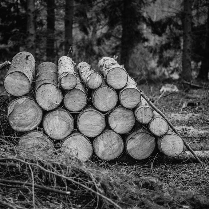 black and white photo of pile of chopped logs